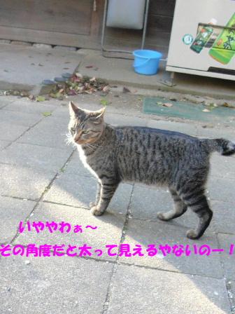 c0110550_105596.jpg