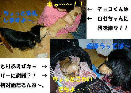 d0089861_4445692.jpg