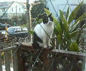 ハッ、猫が…_b0011075_18434923.jpg