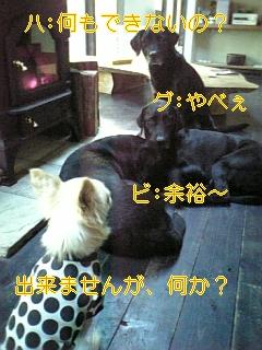 家訓_f0148927_14105437.jpg