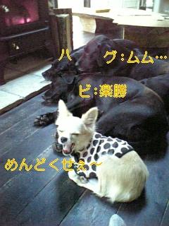 家訓_f0148927_1410789.jpg