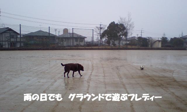d0081210_1485427.jpg