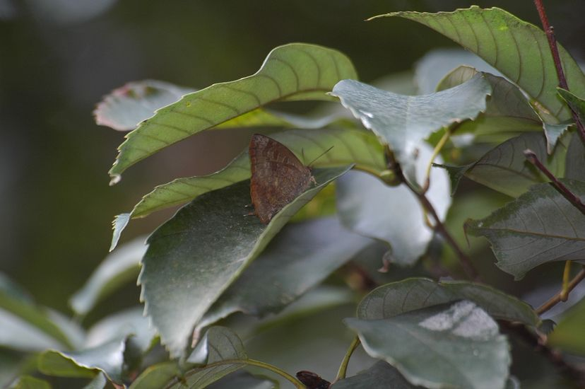 12月23日(くもり一時晴れ)タイトル:越冬種を満喫_f0105542_21432592.jpg