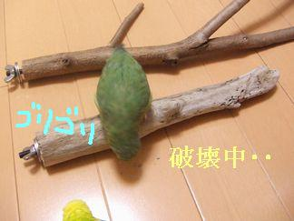 b0082757_1654986.jpg