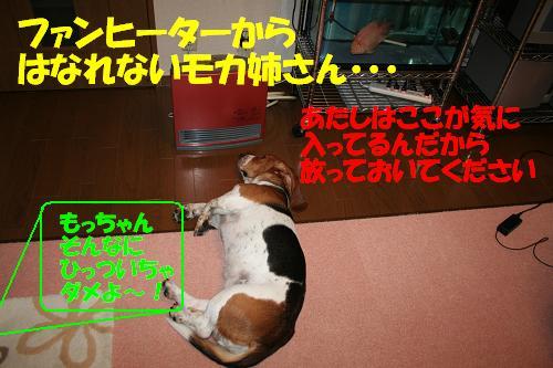 f0121712_1033207.jpg