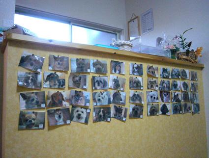 DOG SALON Clover II_f0025970_1114542.jpg