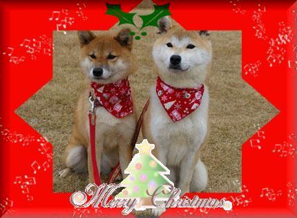 クリスマス・イブ_a0053987_1748484.jpg
