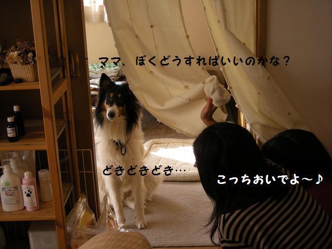 f0081100_15311912.jpg