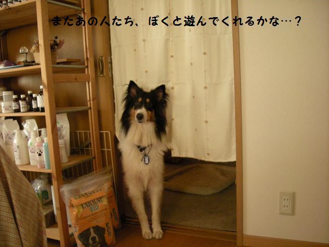 f0081100_15331675.jpg
