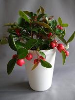 Merry Christmas!_f0139963_8431242.jpg
