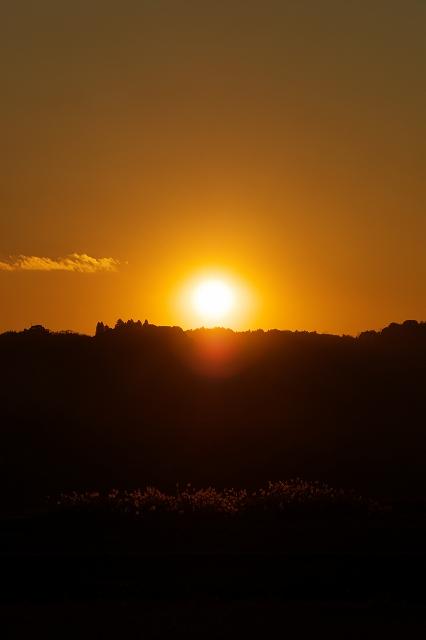 落陽と枯れススキ_f0018464_159254.jpg