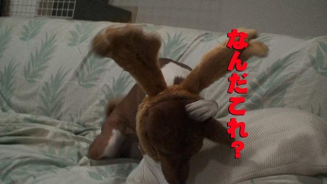 a0101571_1143082.jpg