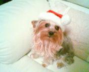 12月27日~29日クリスマスセール致します♪_f0029571_10335333.jpg