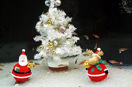 お魚さんも「メリークリスマス」_f0030085_1447271.jpg
