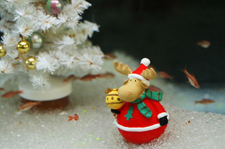 お魚さんも「メリークリスマス」_f0030085_14473970.jpg