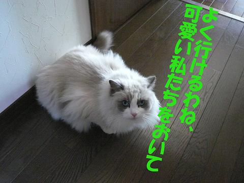 c0117597_2013051.jpg