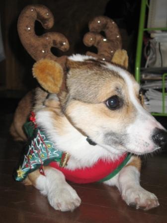 クリスマスパーティ ~JeJe Cafe_f0155118_013630.jpg
