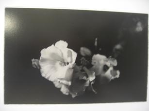 443)③資料館 「北大写真部とその関係者が5室を使った写真展」 終了・12月18日(火)~12月24日(月)_f0126829_23522213.jpg