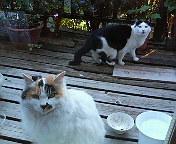 猫_b0011075_20222598.jpg