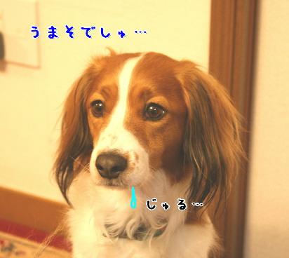 d0013149_213586.jpg