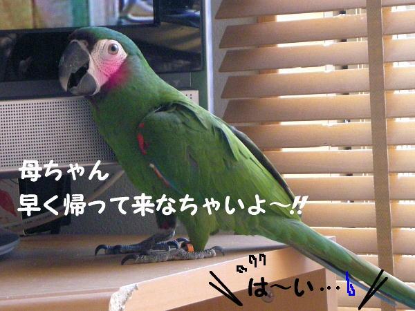 f0132055_039436.jpg