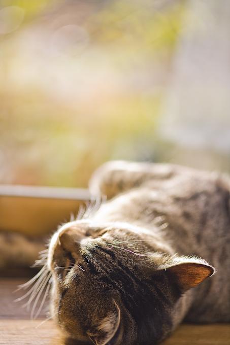 休日の猫_c0150383_20363928.jpg