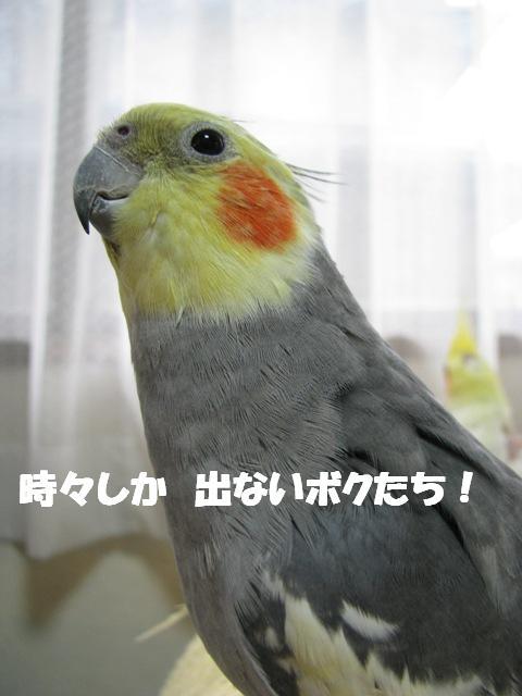 d0081210_22402660.jpg