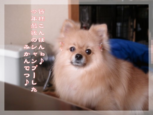 b0078073_22454064.jpg