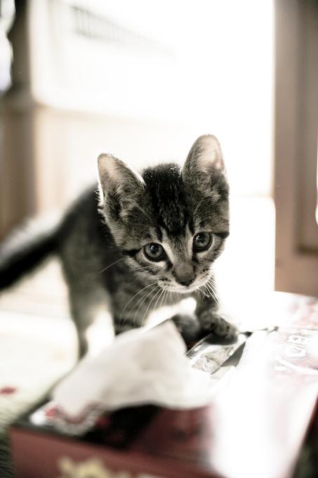 子猫_c0150383_21334660.jpg