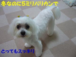 f0145192_16343212.jpg