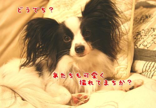 d0013149_1105830.jpg