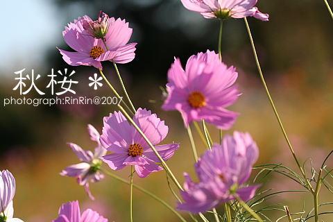 b0079792_9482493.jpg