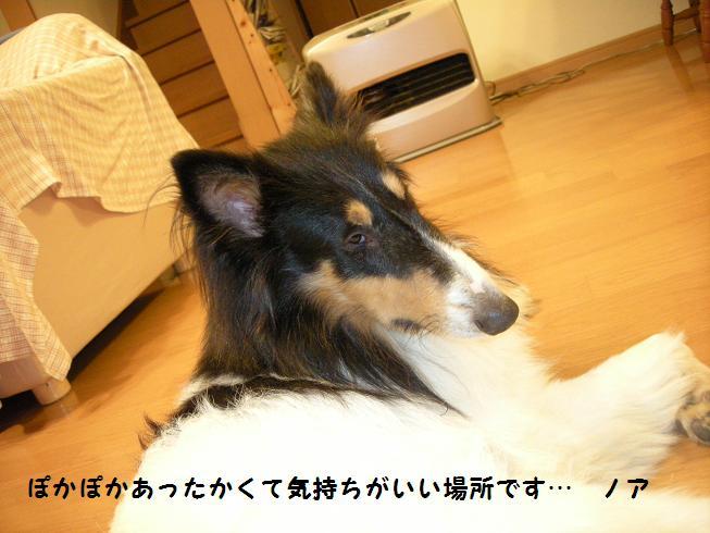f0081100_17581157.jpg