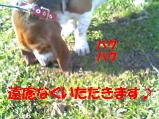 f0121712_104268.jpg