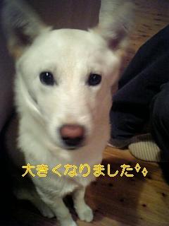 いのしし_f0148927_17214461.jpg