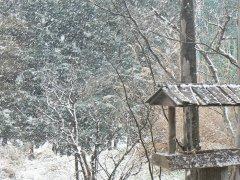 雪です!_f0019247_11151729.jpg
