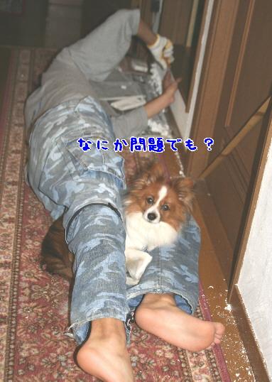 d0013149_049227.jpg