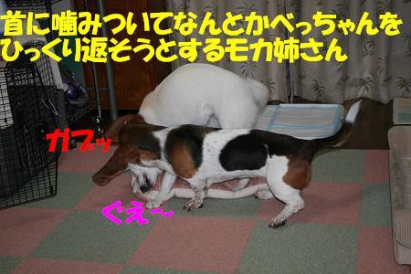f0121712_20262617.jpg