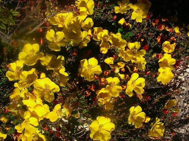 New Year,s Eve fro Cradle Mt Tasmania_f0050534_13592644.jpg