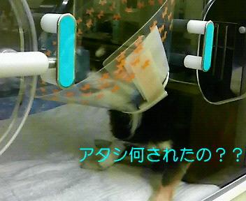 c0121141_1403439.jpg