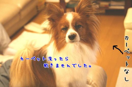 d0013149_2265372.jpg