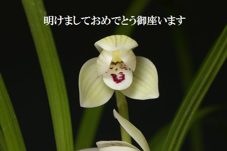◆謹賀新年!!!,、。                No.194_d0103457_21105528.jpg