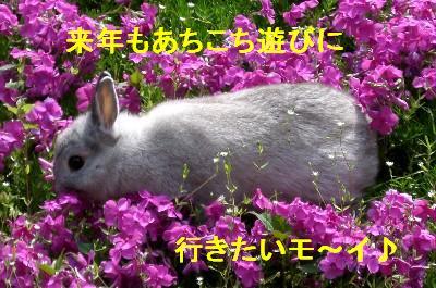 f0104057_2072611.jpg