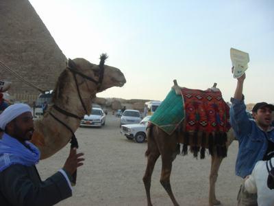 ピラミッドとラクダ_d0100880_682885.jpg