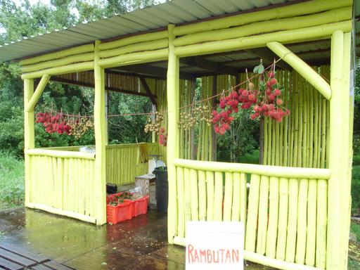 ハワイ島のランブータンスタンド, a rambutan stand in Big Island Hawaii
