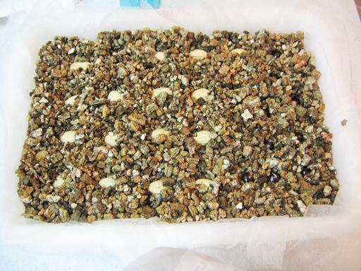 ランブータンの種を発芽床にセット, setting the rambutan seeds onto a seedbed