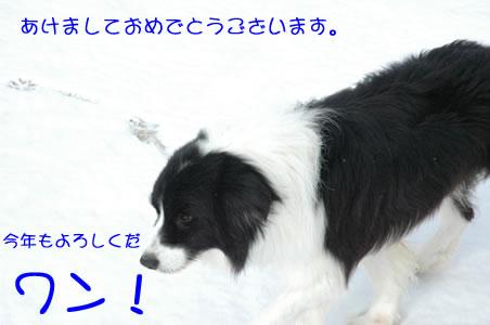 a0074946_1193273.jpg