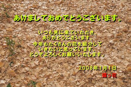 e0054067_1432352.jpg