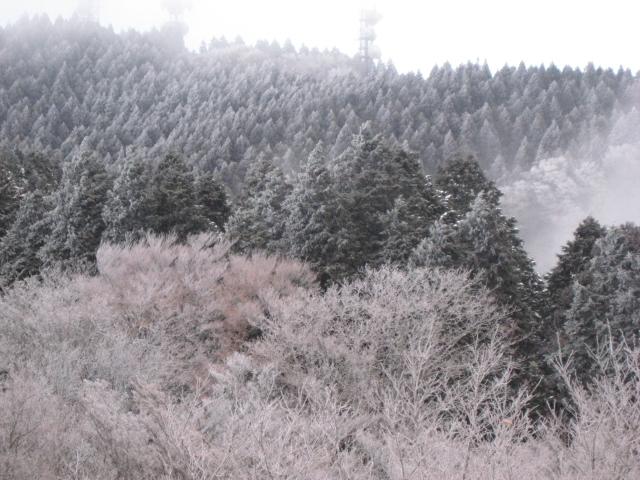 2008年1月1日_e0111396_20541659.jpg