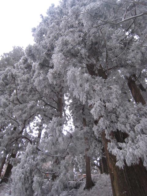 2008年1月1日_e0111396_20573160.jpg